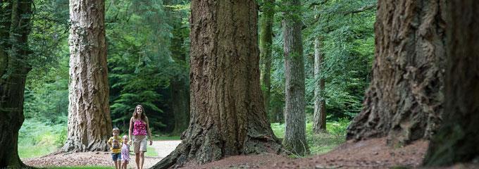 forest future consultation